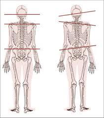kroppen er asymmetrisk